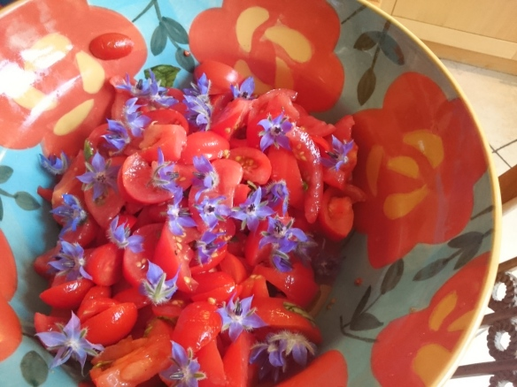 Les jolies fleurs sont des fleurs de bourrache, en provenance de mon jardin